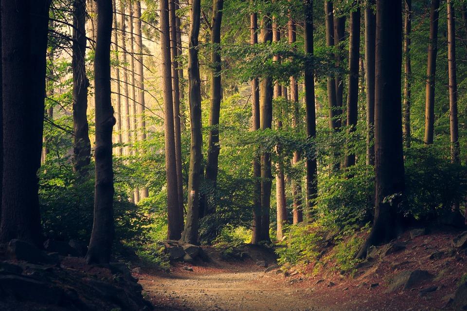 Limfog direkt från skogen